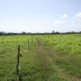REDACCION DELAZONAORIENTAL.NET La Dirección General de Ganadería (DIGEGA) recomendó a los productores ganaderos del país, un conjunto de medidas para hacer frente a los efectos de la sequía que actualmente […]