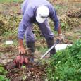 REDACCIÓN DELAZONAORIENTAL.NET El director de la Agencia de Cooperación de Brasil (ABC), embajador Fernando Abreu Marroni, afirmó que la agricultura familiar es fundamental en la economía de Brasil, por los […]