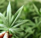 REDACCIÓN DELAZONAORIENTAL.NET COLOMBIA. – El Congreso de Colombia aprobó el miércoles 25 de esta semana, un proyecto de ley que autoriza el cultivo y uso de la marihuana con fines […]