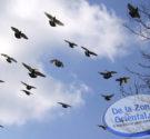 REDACCION DELAZONAORIENTAL.NET Santo Domingo.El Ministerio de Medio Ambiente y Recursos Naturales informó hoy su decisión de poner en veda la cacería de aves silvestres en todo el territorio nacional por […]