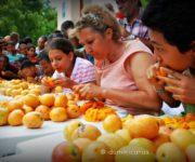 Feria del Mango concurso