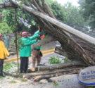 REDACCIÓN DELAZONAORIENTAL.NET Santo Domingo Este-Los fuertes vientos ocasionados por el huracán Irma, derivaron un enorme árbol en el sector de Invivenda quien a su vez arrastró dos postes de empresas […]